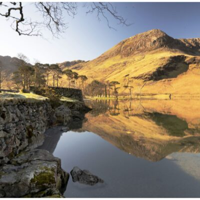 photography, gallery, photo, nature, lake district, tree, wildlife, landscape photography