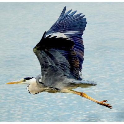 photography, nature, bird, photo gallery, image,