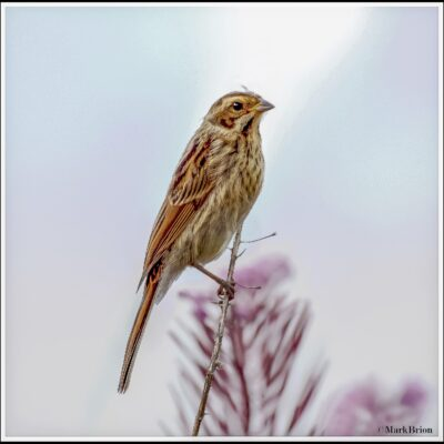 photography, gallery, photo, nature, bird, wildlife